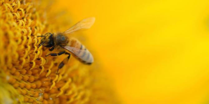 belajar lebah